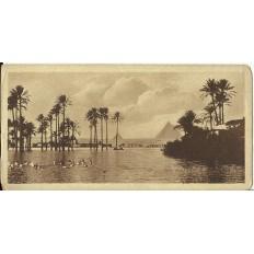 CPA: EGYPTE, Paysage près des Pyramides, années 1900