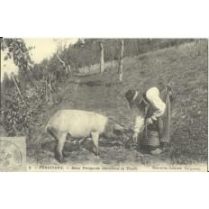 CPA: (REPRO). PERIGUEUX, Deux Périgords cherchant la Truffe, vers 1900.