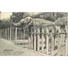 CPA: BARCELONA, Parque Zoologico, Elefante Baby, années / anos 1930
